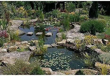 Alfafol - Lona para estanque, 6 x 6 m2, de PVC negro, grosor 0 5 mm, no tóxica, antialgas: Amazon.es: Jardín
