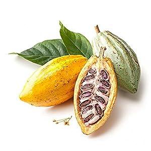 Braceus 40Pcs Cocoa Fruit Seeds Tree Germination Fresh Home Garden Plant Decoration