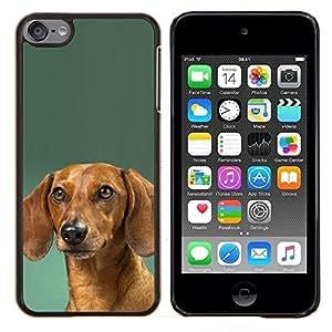 TECHCASE---Cubierta de la caja de protección para la piel dura ** Apple iPod Touch 6 6th Touch6 ** --Dachshund Verde Doxie del perro de perrito