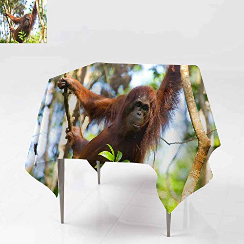 AFGG Washable Square Tablecloth,Big Male Orangutan on a Tree in The Wild 5,Party Decorations Table Cover Cloth,54x54 Inch