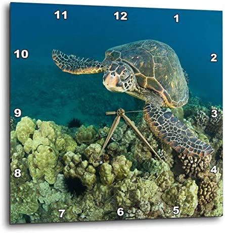 3dRose DPP_89950_2 Green Sea Turtle, Makena Sp, Maui, Hawaii US12 SWS0152 Stuart Westmorland Wall Clock, 13 by 13-Inch