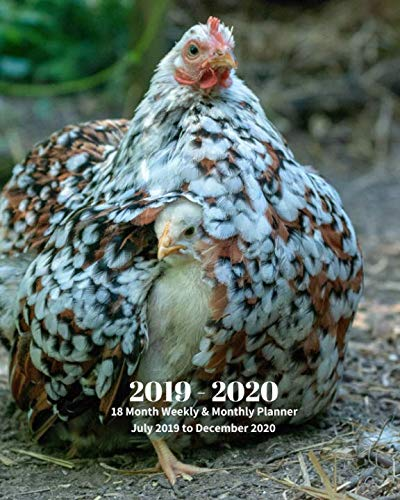 2019 - 2020 | 18 Month Weekly & Monthly Planner July 2019 to December 2020: Chicken and Chick Farm Animal Vol 2 Monthly Calendar with U.S./UK/ ... Holidays- Calendar in Review/Notes 8 x 10 in.]()