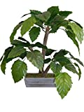 Mamone Home & Garden Mini H Baiyun Leaf Tree in Wood Planter, 28''