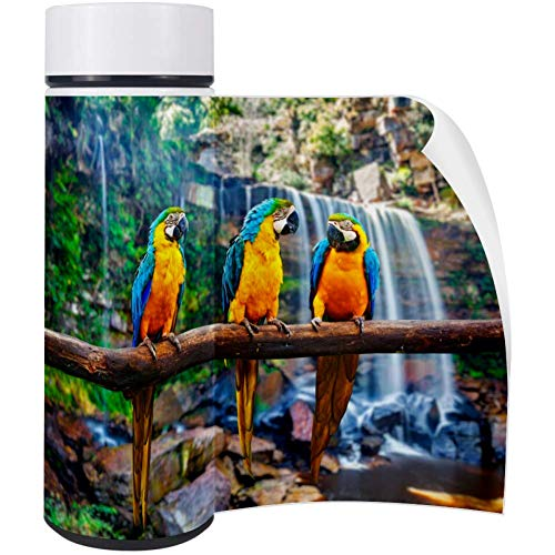 Blue And Yellow Macaw Water Bottle Stainless Steel Office School Thermos 350 ML