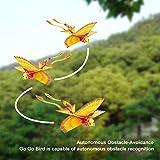 Go Go Bird, Remote Control Airplane, RC