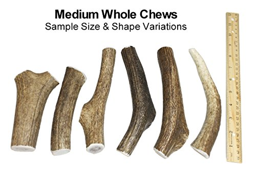 Medium-Whole-Single-Pack-Grade-A-Premium-Elk-Antler-Dog-Chew-for-20-to-45-lb-dogs--Naturally-shed-from-wild-elk--No-Mess-No-Odor--Made-in-the-USA