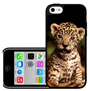Baby Tiger with Blue Eyes Hard Snap on Phone Case (iPhone 5c)