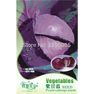 Hot Selling 40pcs Purple Cabbage Seed, Vegetable Seed, Bonsai Pot Plant Home Garden : Everything Else