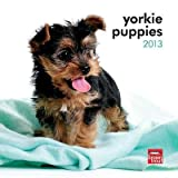 (7x7) Yorkshire Terrier Puppies - 2013 Mini Calendar by Poster Revolution