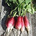 Radish Seed ,French Breakfast , Heirloom, Organic, Non Gmo, 100 Seeds, Radishes