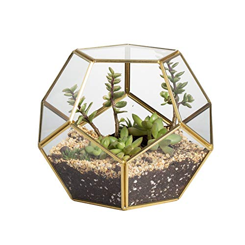 Close Footed Gold Copper Brass Glass Geometric Terrarium with Door Pentagon Ball Shape Close Fern Moss Succulent Planter Pot Display Case Box 5.9inches (No Plants)