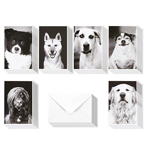 36 Pack All Occasion Assorted Blank Note Cards Greeting Card Bulk Box Set - Compawssion Adorable Rescue Dog Pictures Black and White Designs - Notecards with Envelopes Included 4 x 6 inches