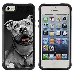 Suave TPU GEL Carcasa Funda Silicona Blando Estuche Caso de protección (para) Apple Iphone 5 / 5S / CECELL Phone case / / American Bulldog White Black Collar Dog /