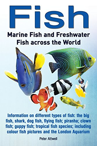 Fish: Marine Fish and Freshwater Fish Across the World: Information on Different Types of Fish: The Big Fish, Shark, Dog Fis (Fish Washington)