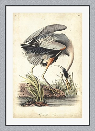 Great Blue Heron by John James Audubon Framed Art Print Wall Picture, Flat Silver Frame, 32 x 44 ()
