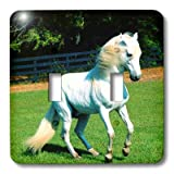 3dRose LLC lsp_101022_2 Photo of Beautiful Arabian White Horse Double Toggle Switch