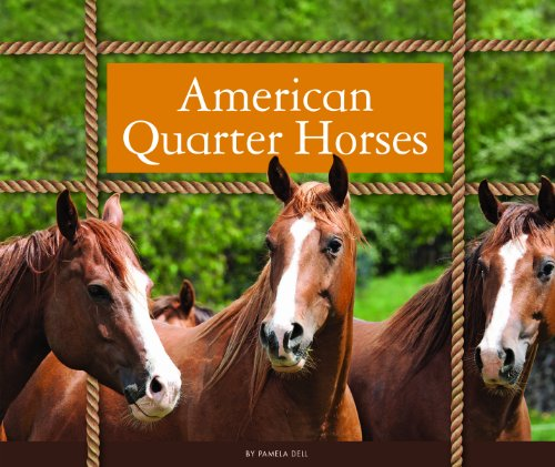 American Quarter Horses (Majestic Horses) - Close Quarter Bit