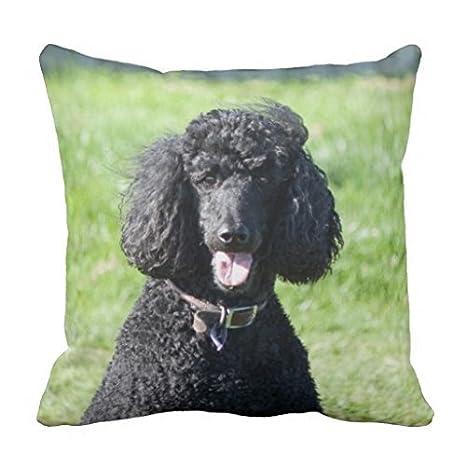 Amazon.com: Estándar de caniche perro negro Funda para cojín ...
