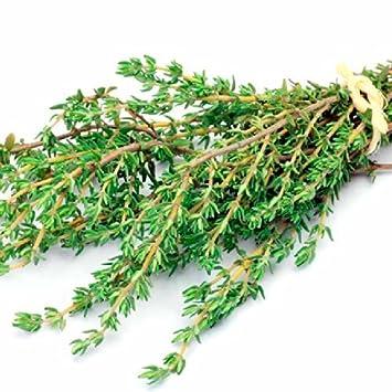 Pinkdose® Herb Seeds Home Depot - Herb Thyme English Winter Kitchen Garden Pack de