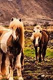 Iceland Horses Notebook