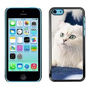 Be Good Phone Accessory // Dura Cáscara cubierta Protectora Caso Carcasa Funda de Protección para Apple Iphone 5C // White American Curl Norwegian Cat
