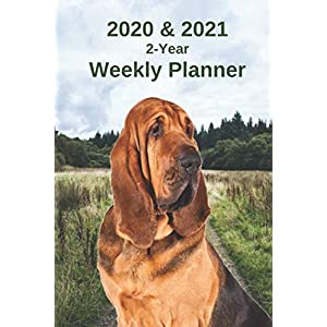 2020 & 2021 Weekly Planner | Two Year Appointment Book Gift | Two-Year Agenda Notebook for Bloodhound Dog Owners: Cover Month Calendar: 2 Years of ... Work, Personal, Dog Training Schedule, etc. 1