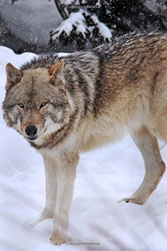 A Wolf in the Snow in Yellowstone National Park Wyoming USA Journal: 150 Page Lined Notebook/Diary
