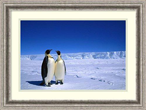 Oxford Pete Emperor Penguins Cape - 1