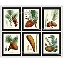 Botanical Print Set of 6 Antique Beautiful Redoute Pinecones Pine Tree Green Forest Nature Home Room Decor Wall Art Unframed