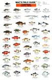 Northeast Coastal Fishes, Craig MacGowan, 0898862442