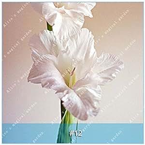ZLKING 1 PC 15 tipos gladiolo Flor china bombilla no gladiolo Semillas frescas de alta germinación Tasa fácil de cultivar orquídeas Bonsai 12