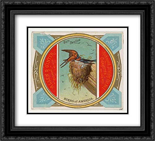 Allen & Ginter 2X Matted 22x20 Black Ornate Framed Museum Art Print - Barn Swallow, from The Birds of America Series (N37) for Allen & Ginter Cigarettes