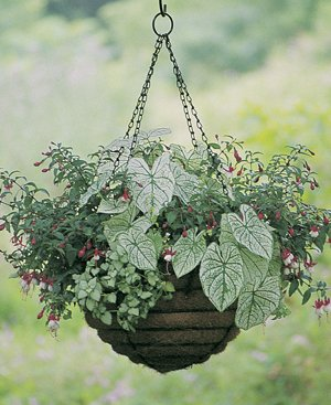 Set of 10 14'' Hanging Basket Planter Euro Classic - No Liners Included by Kinsman
