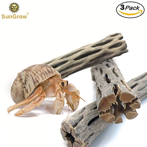 3 Pcs Cholla Wood - Increase Lifespan of Hermit Crabs 3X - 100% Natural, Organic - Develops Shell Naturally - Boredom Buster Climber Toy for Crabs - Good Source of Cellulose - Pesticide-Free, Pet (Natural Hermit Crab)