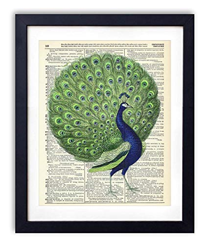 Colorful Peacock Upcycled Vintage Dictionary Art Print 8x10