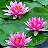 WILLBOND 12 Pieces 4 Kinds Artificial Lotus Leaves