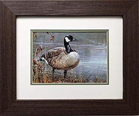 Robert Bateman Pride Of Autumn Canada Geese Framed Art 17 5 X 14 5 Posters Prints