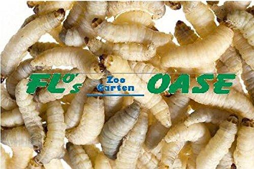 40 Stück Bienenmaden Wachsraupen Wachsmaden Angelköder Köder Futtertiere Flos-Oase