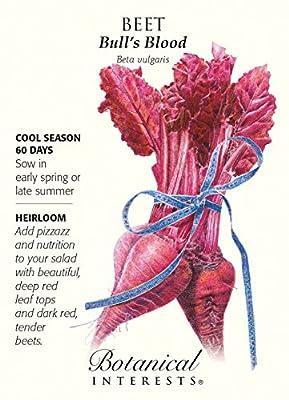 Bull's Blood Beets Heirloom Seeds - 3 grams