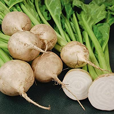 White Beet Root Seeds Pack of 20 Seed 3 : Garden & Outdoor