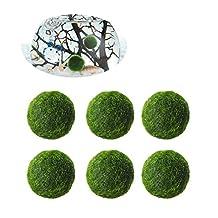 UEETEK Marimo Moss Balls by Aquatic Arts Aquarium Natural Plants 0.47inch- Pack of 6 Pcs