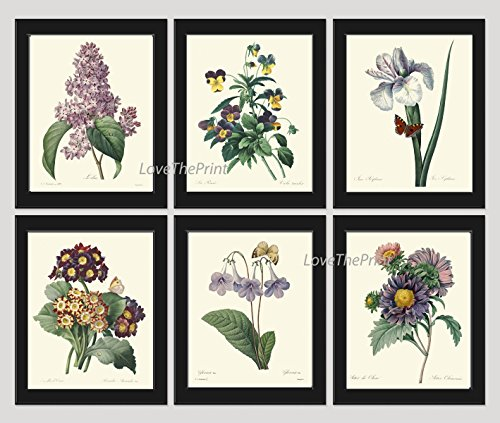 Botanical Set of 6 Prints Antique Redoute Beautiful Purple Violet Flowers Wildflowers Iris Aster Lilac Pansies Butterfly Home Room Decor Wall Art Unframed (Iris Purple Framed)