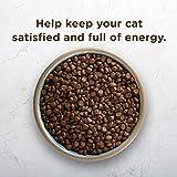 Rachael Ray Nutrish Peak Natural Dry Cat