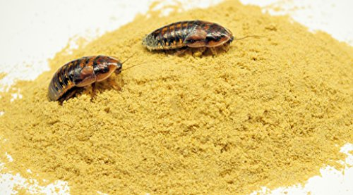 Roach Chow Super Honey Mix 2 lbs. High Protein Food For Dubia And Crickets!