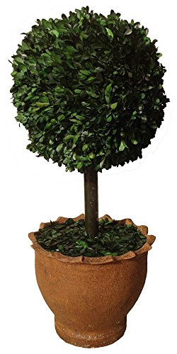 - Laura Ashley 29-Inch Preserved Boxwood Topiary Ball in Clay Planter