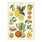 Cavallini Papers & Co. Inc, Citrus Wrap, 20x28