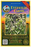 Everwilde Farms - 2000 Thai Basil Herb Seeds - Gold Vault Jumbo Seed Packet