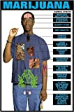 "Harmful Effects of Marijuana 24"" X 36"" Laminated Poster"