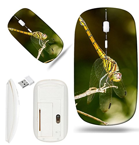 Luxlady Wireless Mouse White Base Travel 2.4G Wireless Mice with USB Receiver, 1000 DPI for notebook, pc, laptop, macdesign IMAGE ID: 22391110 Dragonfly on a background of green sitting on a branch ()