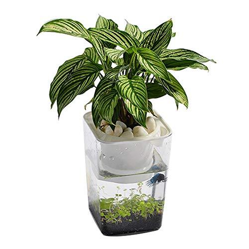 Ecosystem Fish Tank- Fish Vegetables Symbiotic Water Grass Mini Fish Tank, Hydroponic Cleaning Tank